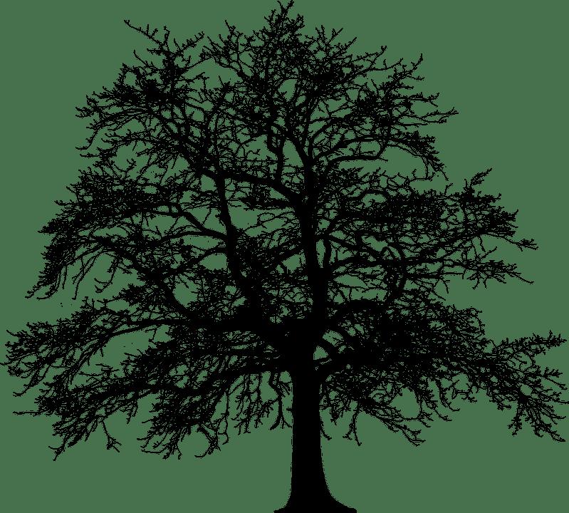 Wir pflanzen einen Baum