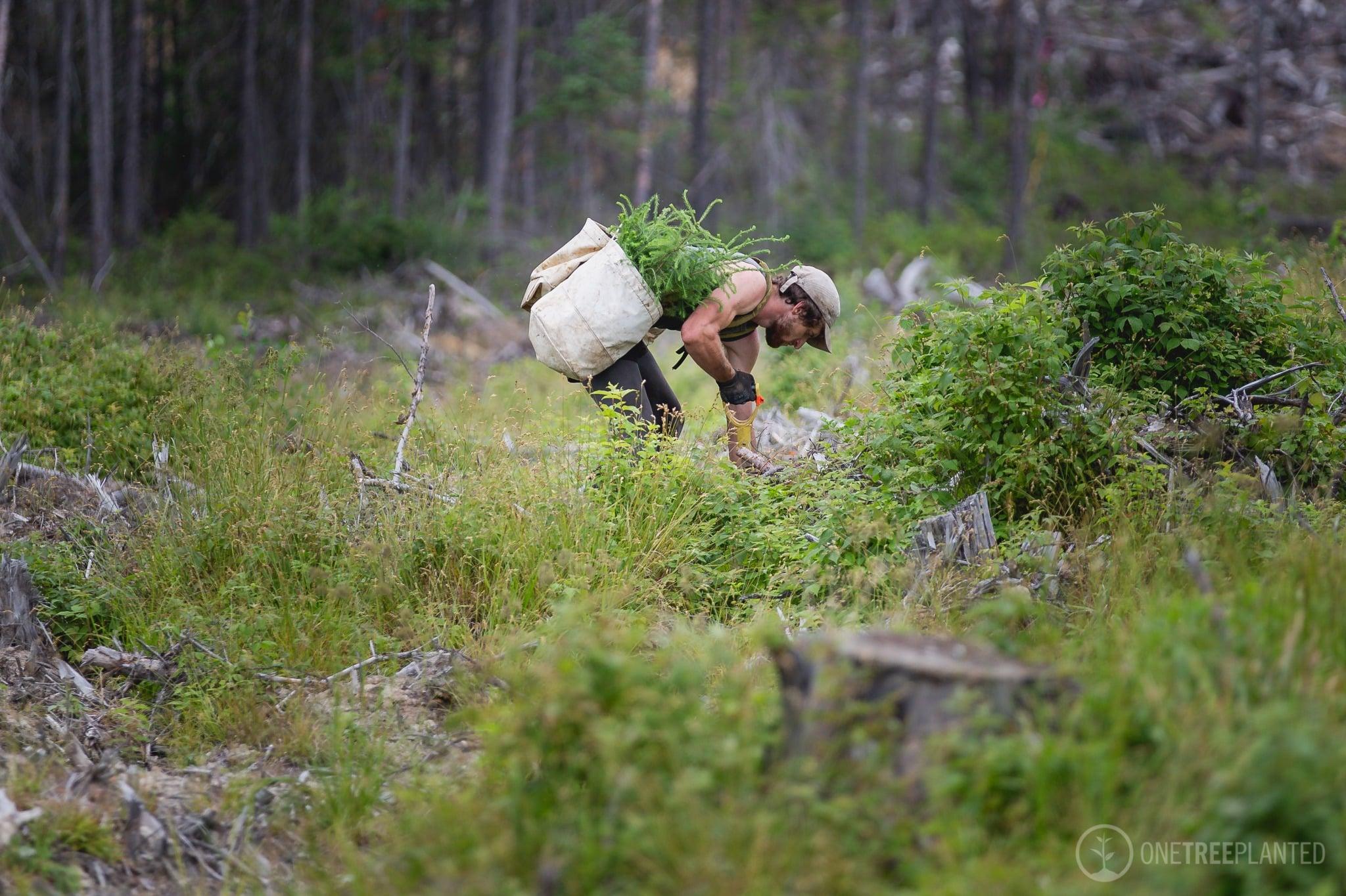 Pflanze Bäume mit uns und unserem Partner onetreeplanted